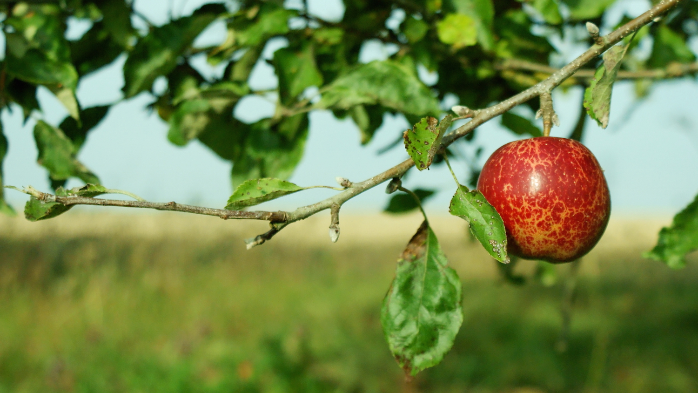 Agricultura ecologicăîn Europa de astăzi
