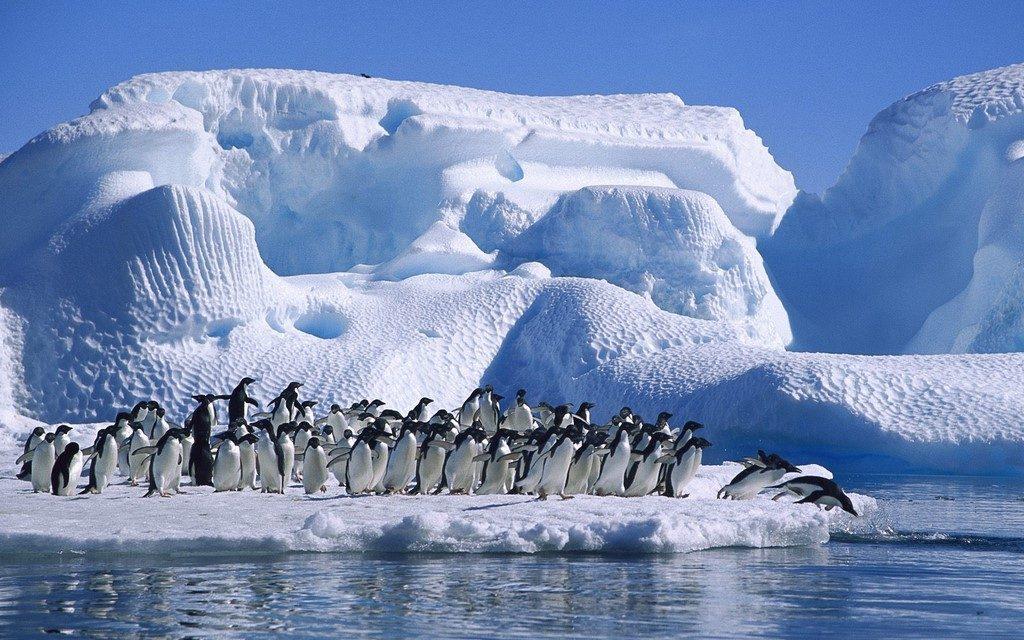 Ce se întampla atunci cand temperatura Oceanului Antarctic creste cu numai un grad Celsius?